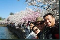 櫻花......