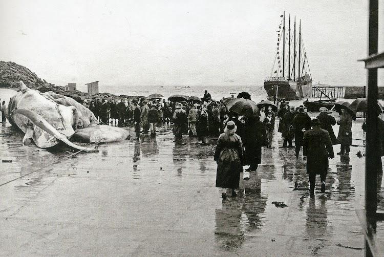Fecha 14 de diciembre de 1924. Caneliñas. Inauguración de la factoria de la Compañia ballenera Española.jpg
