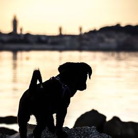 Doggy Portrait by Kristofor Gulić - Animals - Dogs Puppies ( doggie, doggy, dog portrait, dog portraits, dog )