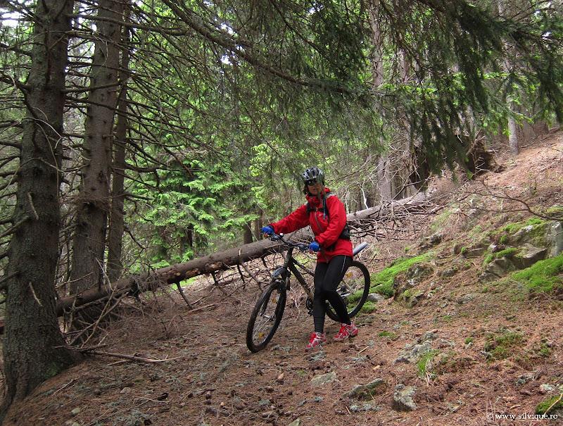 Bicicleta in Capatanii