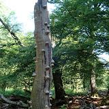 Een klimboom, met ...