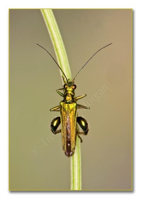 2 Bugs 1 Thick-leg