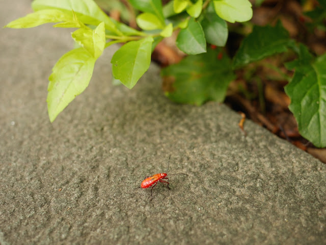 red insect with six white and two black spots in Fuzhou
