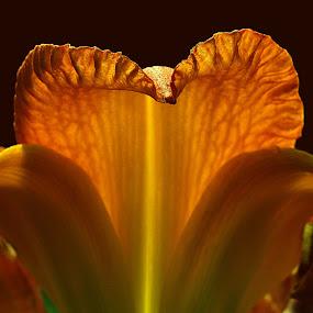 Cobra Iris by Ron Plasencia - Nature Up Close Flowers - 2011-2013