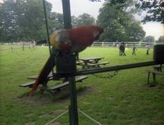 1981.07.12-020.03 perroquets