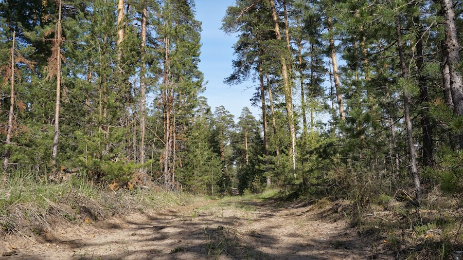 В заволжском лесу
