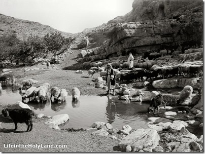 Shepherd resting with flock at Ein Farah, mat05629