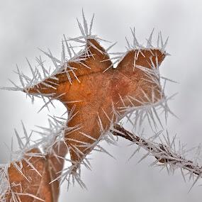 Hoar Frost Prison by Larry Kaasa - Landscapes Weather