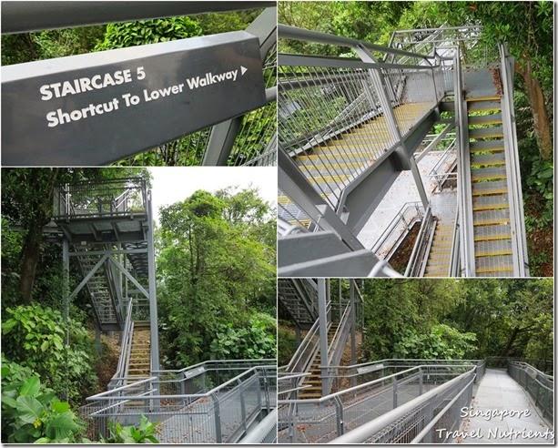 新加坡花柏山 (100)