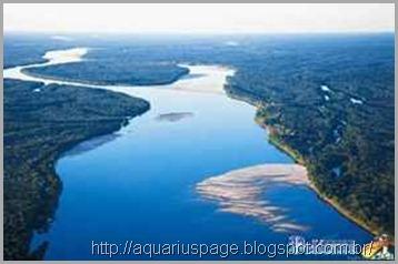 amazonia-roubo-água