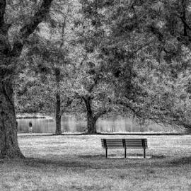 by Pam Cook - City,  Street & Park  City Parks