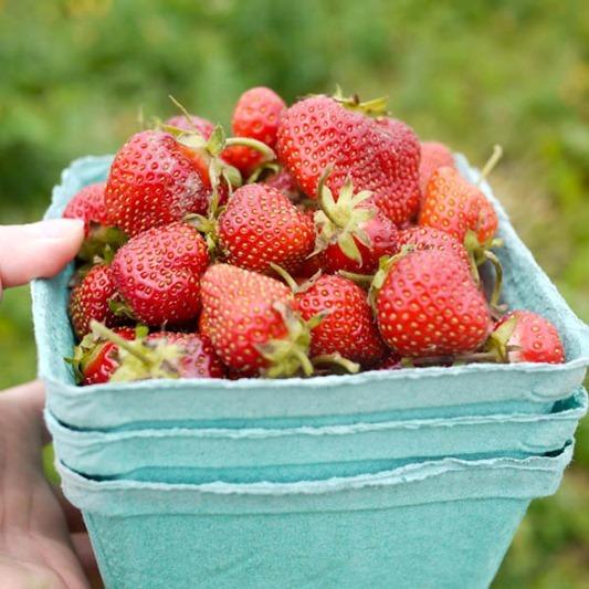 strawberry_picking-1-6