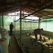 11 Attività di allevamento avviata da cooperative di disabili.jpg