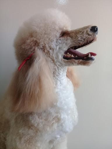 Bicho pra Bicho - Pet shop, R. Voluntários da Pátria, 2631 - Jardim Nova America, Araraquara - SP, 14801-320, Brasil, Loja_de_animais, estado São Paulo