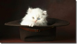 77- gatos blanco o crema (14)- buscoimagenes