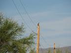 hawk watching construction 11-4