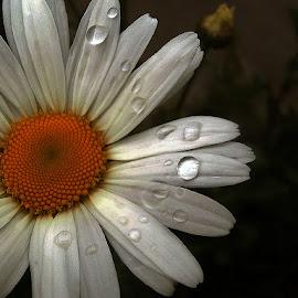 ...neumoljiva, neumoljiva, proljetna kišica stalno joj kvari make up!... by Katica Pecigoš-Kljuković - Nature Up Close Natural Waterdrops