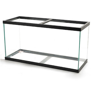 Image of a 90 gallon glass fish tank