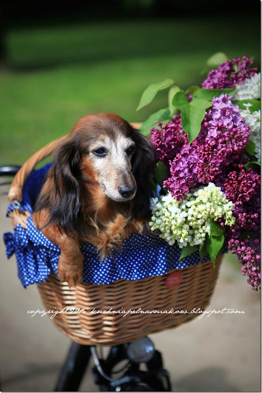 pies w koszyku (4)