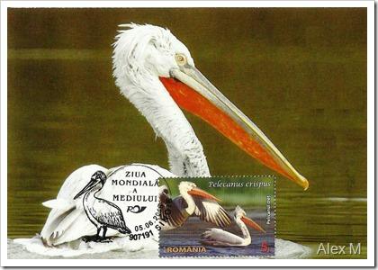Pelicanul-cret-1