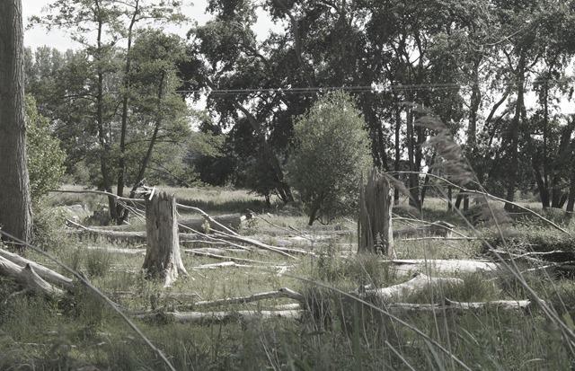 Norfolk countryside in summer