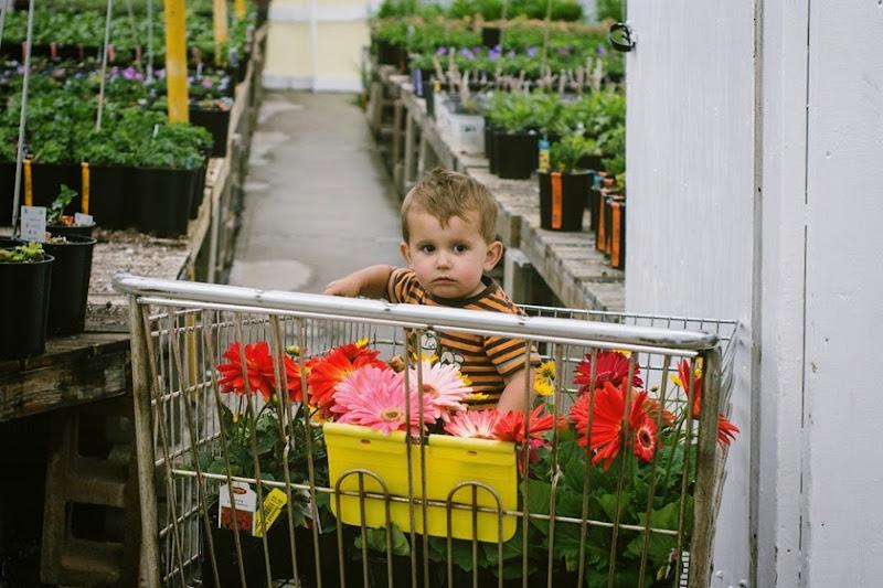 flowergarden4
