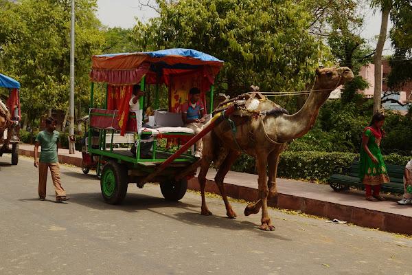 повозка верблюд