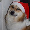 Bo Weihnachtsbild 2011.jpg