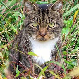 Community Garden Cat by Erika  Kiley - Animals - Cats Portraits ( hunter, cat, grass, hidden, mammal )