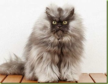 Colonel Meow'