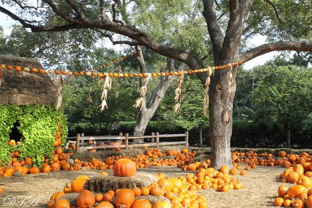 Pumpkins Arboretum 079