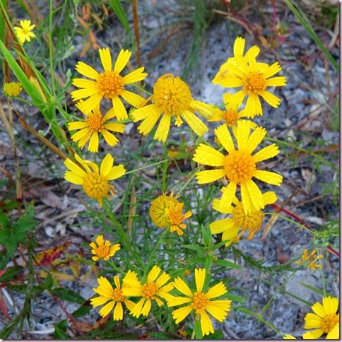 flowersIMG_4075