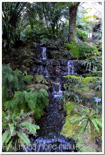 Royal Tasmanian Botanical Gardens ~ How Many More Minutes?