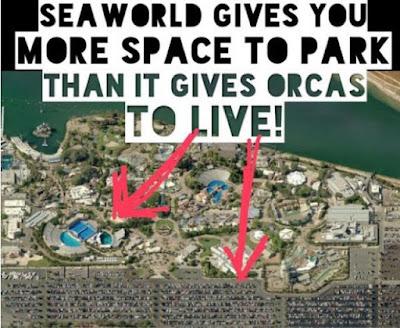 Seaworld Car Park Compared To Orca
