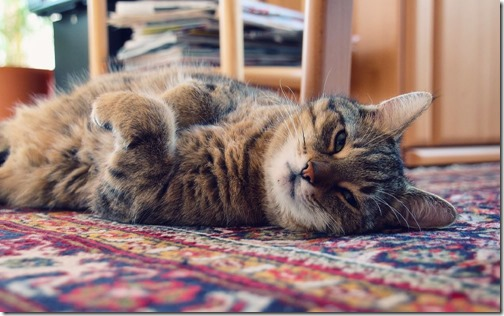 1123cute-cats-wallpapers-background-137