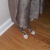 Os gatos não são muito bons em esconde-esconde 0