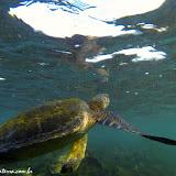 Snorkel com tartarugas - Tintoreras - Isabela - Galápagos, Equador