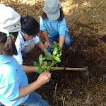Las castoras Yanira y María plantando