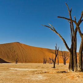 DEAD TREE LANDSCAPE  by Issi Potgieter - Landscapes Deserts ( dead valley, dead tree, dead, namibia,  )