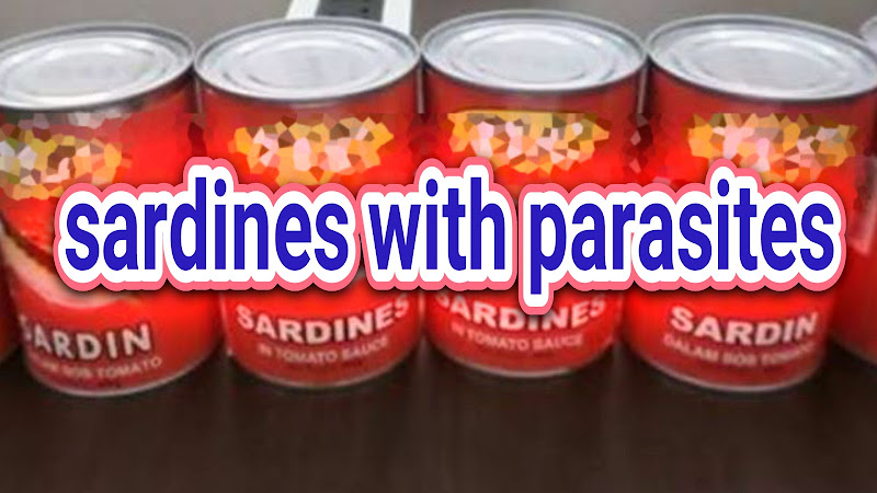 Image of Chinese Sardines are Packed with Parasites