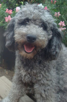 Gorgeousdoodles High Rocky Mt Silver Stormy.