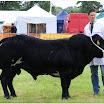 cattle15.jpg