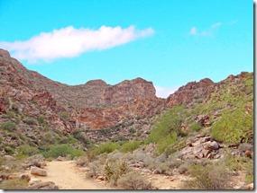 Sand Hill Cranes Wilcox AZ 039