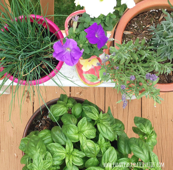 Potted-Herb-and-Flower-Garden