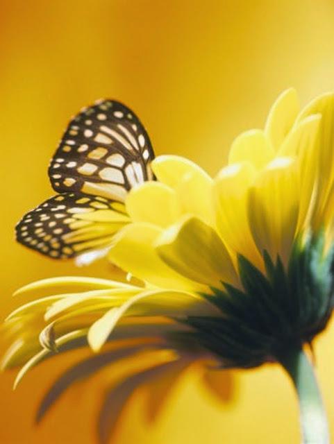 Beautiful Butterfly - カバー