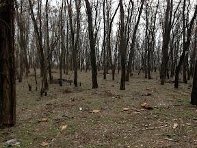 лес26.jpg