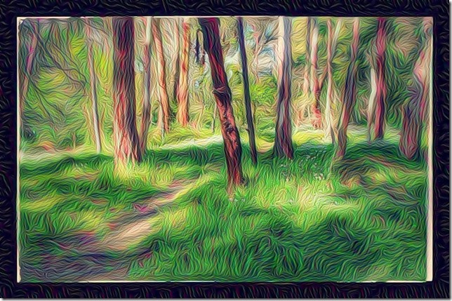 An Antipodian Walk in the Woods