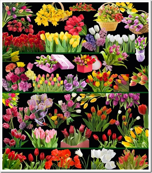 Beautiful tulips clipart