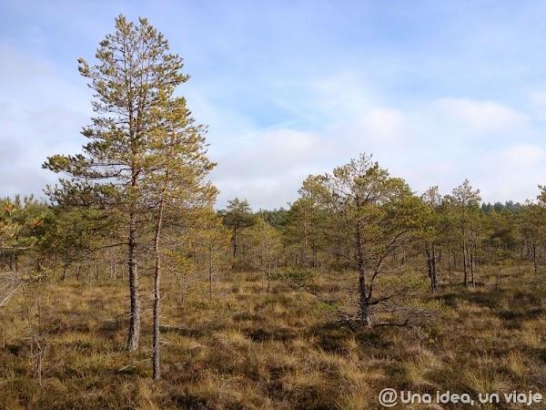 recorrido-paises-balticos-top-3-parques-naturales-unaideaunviaje.com-25.jpg