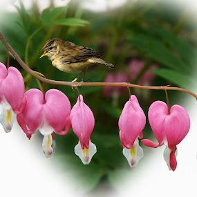 A little love by JCstudios by John Cuthbert - Print & Graphics All Print & Graphics ( love, bird, wall art, heart, nature, framed print, jcstudios, canvas, cute, print )